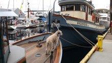 Ladysmith Maritime Festival