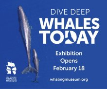 Opening: Whales Today Exhibit