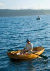 Coot rowing to sailboat